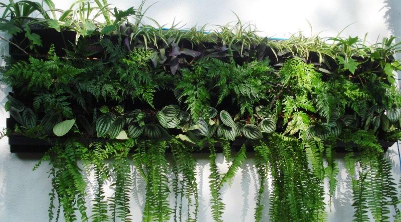 jardim vertical imagens:Jardim Vertical