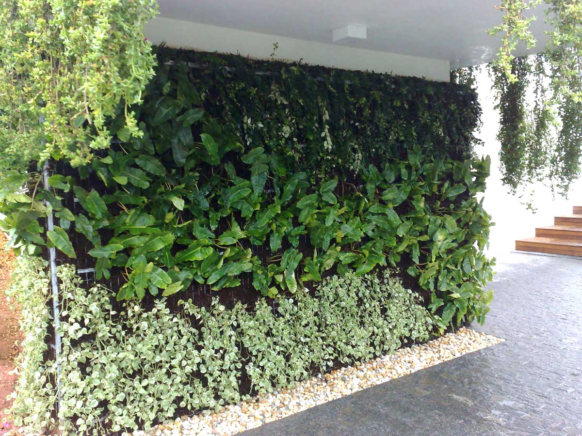 jardim vertical externo : plantas jardim vertical externo ? Doitri.com