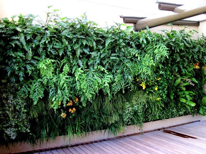 plantas jardim vertical meia sombra : plantas jardim vertical meia sombra:Jardim Vertical